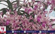 Rực rỡ sắc màu trong Hội thi Hoa phong lan