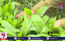 Tuyên Quang trồng mới 10.500 ha rừng trong năm 2021