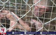 Bắt được một cá thể khỉ quý hiếm tấn công người