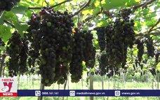 Ninh Thuận đẩy mạnh liên kết phát triển nông nghiệp