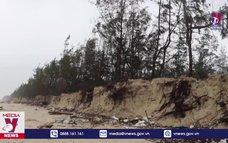 Quảng Trị mất rừng phòng hộ do xâm thực biển