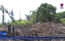 Phú Yên kiểm tra vụ phá rừng tại xã Phú Mỡ