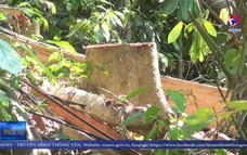 Bắt giữ các đối tượng phá rừng giáp ranh ở Phú Yên