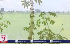 Thái Lan thúc đẩy kinh tế sinh học