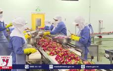 Xuất khẩu nông sản sang EU tăng mạnh