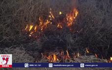 Cháy rừng tàn phá vùng đầm lầy lớn nhất thế giới