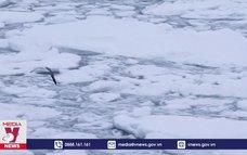 Lượng băng tại biển Bắc Cực giảm kỷ lục