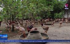 Hỗ trợ phát triển chăn nuôi con đặc sản