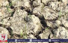 Trà Vinh thiệt hại khoảng 1.000 tỷ đồng do hạn, mặn