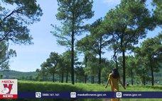 Độc đáo rừng thông, bãi rễ ở chân núi Côn Sơn