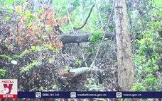 Phá rừng giáp ranh tại Phú Yên nhiều hơn báo cáo