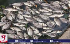 Cá chết nổi trắng kênh Bưng Cải, Bình Dương