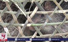 Bắt vụ vận chuyển 6 cá thể động vật trái phép