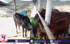 Lạng Sơn chống đói rét cho đàn vật nuôi