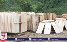 Doanh nghiệp chế biến gỗ không mua được gỗ ở địa phương