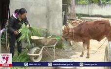 Người dân vùng lũ khôi phục sản xuất đón Tết