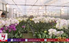 Những vườn lan công nghệ caoở Huế
