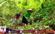 Triển khai sáng kiến trồng một tỷ cây xanh