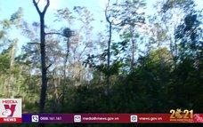 Kinh nghiệm giữ rừng phòng hộ ở H'ra