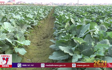 Tình nguyện hỗ trợ tiêu thụ nông sản vùng dịch