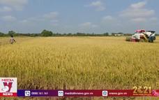 Vụ Thu – Đông, nông dân Bến Tre được mùa được giá