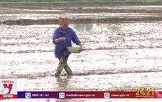 Nông dân Nam Định tập trung chăm sóc và bảo vệ lúa xuân