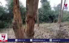 Điều tra vụ phá rừng tại Vườn Quốc gia Xuân Sơn