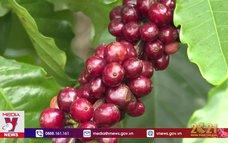 Sản phẩm OCOP giúp tăng thu nhập cho khu vực nông thôn