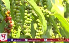Hợp tác xã giúp nông dân nâng cao giá trị sản phẩm