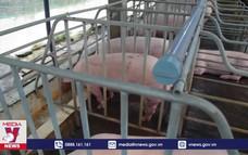 Kiên Giang tăng cường chống dịch tả lợn Châu Phi dịp Tết