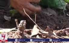 Kon Tum phòng chống cháy rừng cao điểm mùa khô