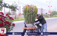 Sức mua hoa Tết bắt đầu tăng ở Phú Yên
