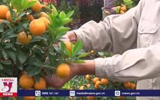 Thị trường hoa Tết Ninh Bình thấp thỏm lo âu