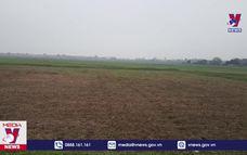 Nhiều cánh đồng rộng lớn ở Vĩnh Phúc bị bỏ hoang