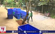 Bảo tồn và nhân nuôi các loài rùa quý hiếm ở Ninh Bình