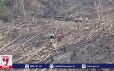 Báo động tình trạng rừng tái sinh ở Nậm Pồ bị khai tử