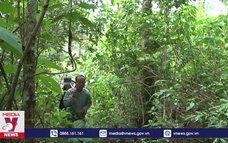 Sìn Hồ tăng cường bảo vệ rừng trước mùa cao điểm