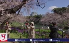 Ngắm hoa anh đào bung sắc ở Tokyo