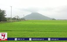 Người dân cẩn trọng khi chuyển nhượng đất trồng lúa