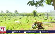 Kon Tum chủ động ứng phó với cao điểm mùa khô