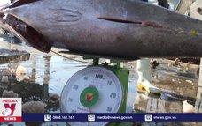 Nguy cơ suy giảm nguồn lợi thủy sản tại Khánh Hòa