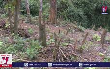 Xử lý nghiêm vụ phá rừng tại VQG Xuân Sơn