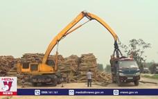 Tuyên Quang nỗ lực phát triển lâm nghiệp bền vững