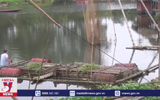 Điều tra nguyên nhân cá chết bất thường trên sông Mã