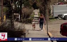 Chú chó chỉ chạy bằng 2 chân sau tại Mỹ