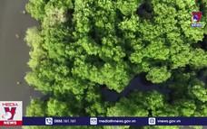 Giáo dục thế hệ trẻ trồng và bảo vệ rừng ngập mặn