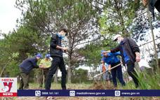 Lâm Đồng khởi động trồng 50 triệu cây phủ xanh