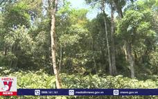 Xử lý nghiêm hành vi phá rừng tại Vườn Quốc gia Hoàng Liên