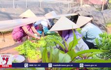 Phát triển Ngành kinh tế sinh thái