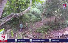 Kỷ luật cán bộ để xảy ra chặt phá rừng đặc dụng